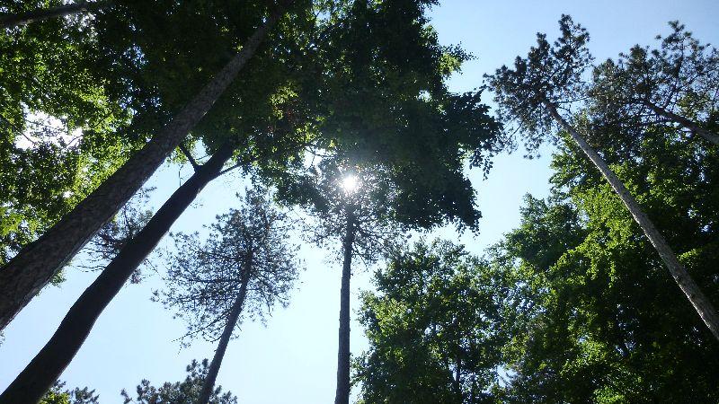 Guglzipf Berndorf Wandern Natur Wald Baum Bäume