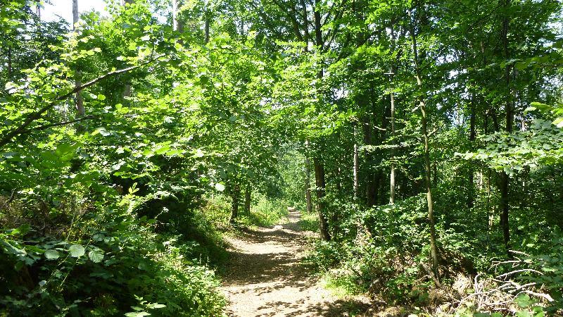 Guglzipf Berndorf Wandern Natur Wald Bäume