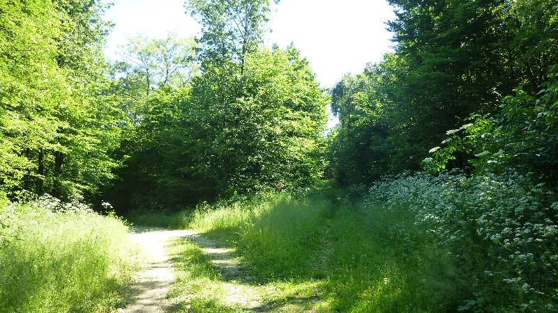 Sonnenberg Wandern Leithagebirge Wanderung Waldweg Wald Weg