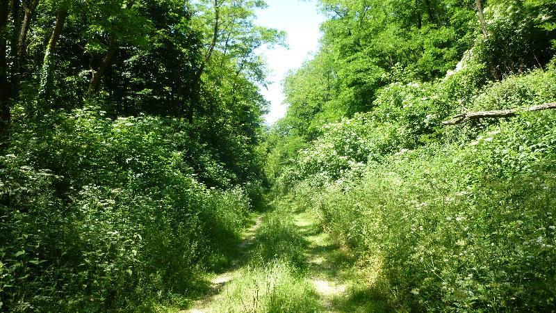 Sonnenberg Wandern Leithagebirge Wanderung Waldweg Wald Weg Natur