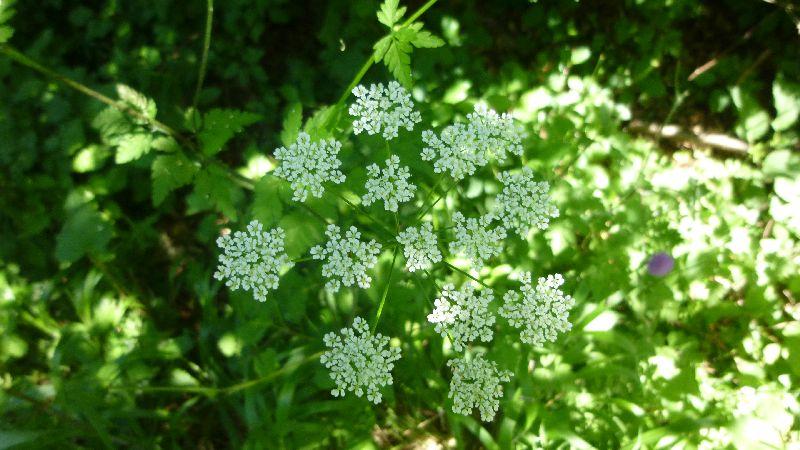 Sonnenberg Wandern Leithagebirge Wanderung Waldweg Wald Weg Pflanzen Natur