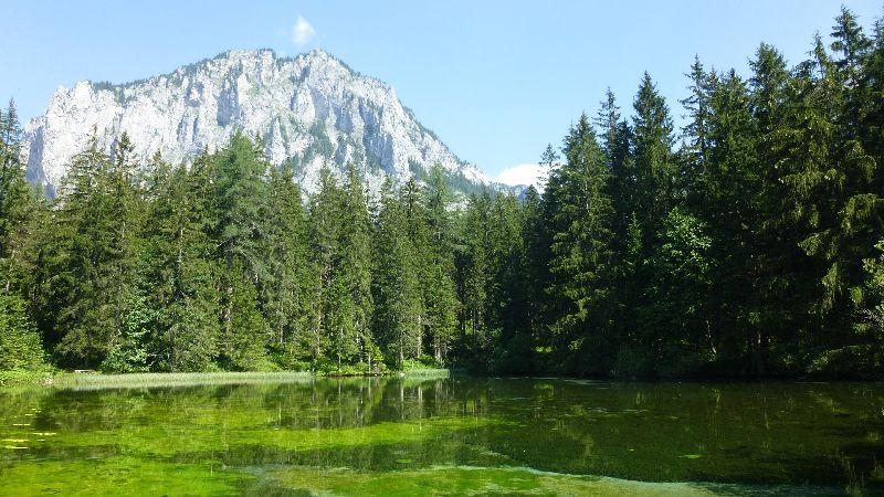 Grüner See Gruener See Steiermark Natur Wandern Pfarrerteich Teich