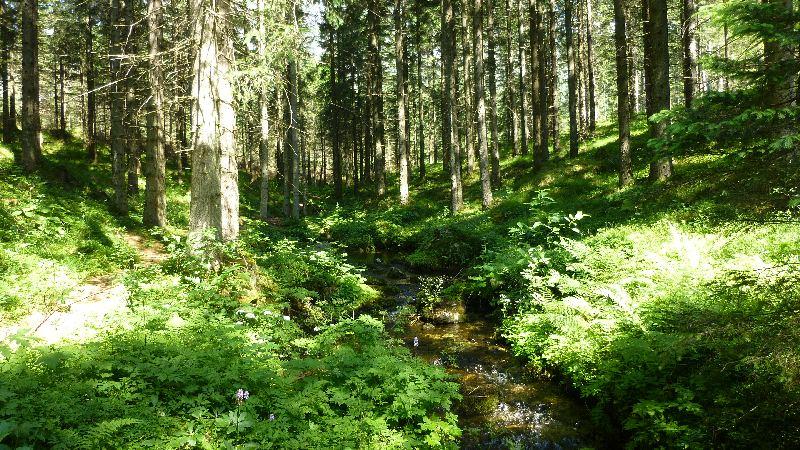 Grüner See Gruener See Steiermark Natur Wandern Bach Wald