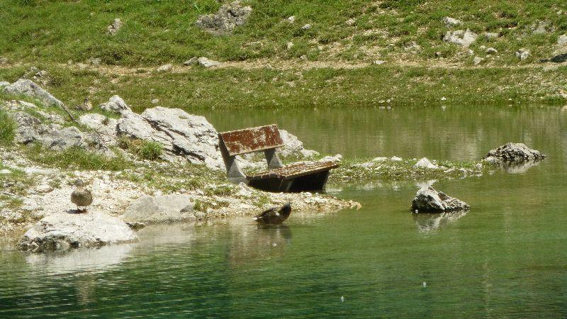 Grüner See Gruener See Steiermark Natur Wandern