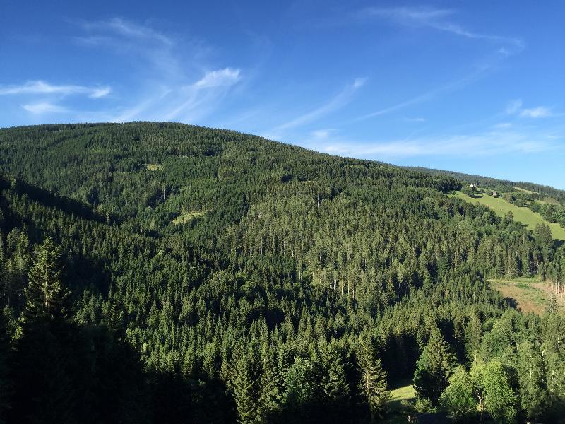 Wandern Natur Wald Mariensee Wildwasser Pöstlingbach Marienseer Schwaig Alm Berg Wechsel Aussicht