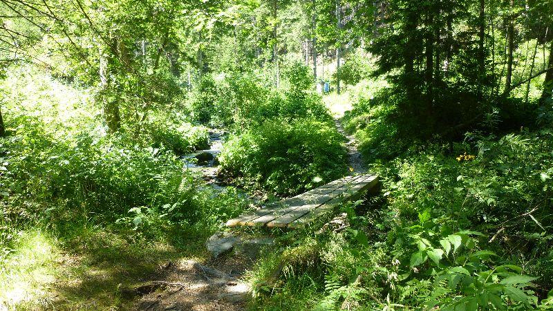 Wandern Natur Wald Mariensee Wildwasser Pöstlingbach