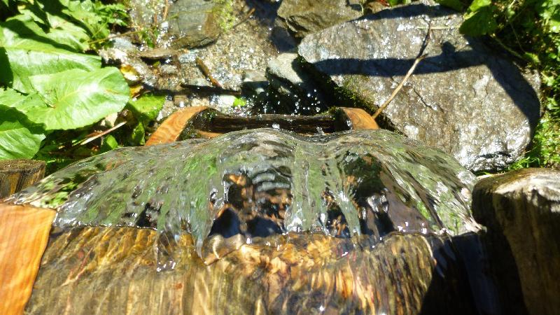 Wandern Natur Wald Mariensee Wildwasser Pöstlingbach Wasser Wassermühle