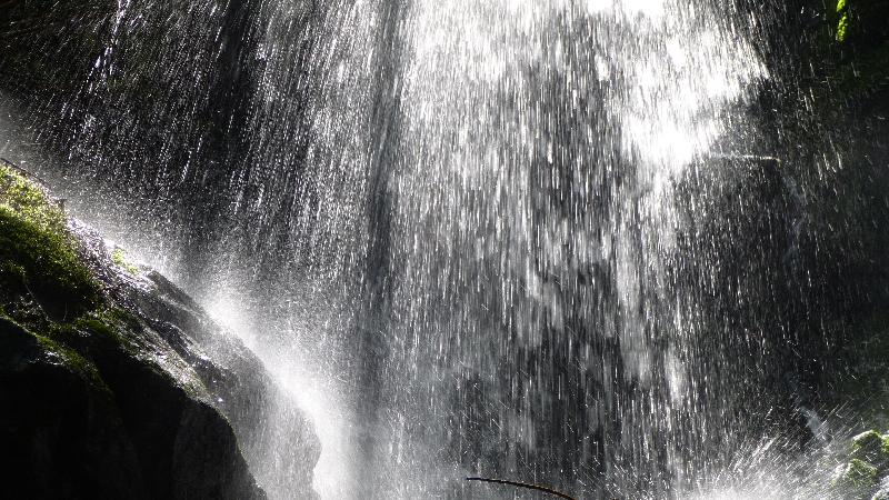 Wandern Natur Wald Mariensee Wildwasser Pöstlingbach Wasserfall