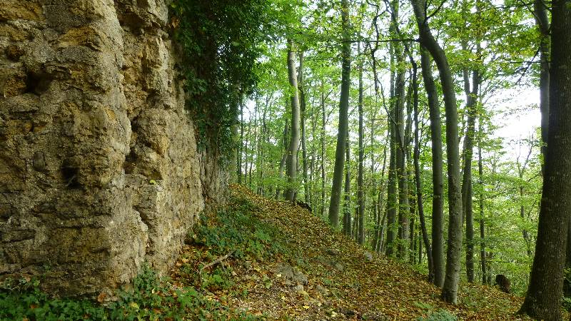 Maria Raisenmarkt Ruine Arnstein Peilstein Wandern Natur Wald Wanderung