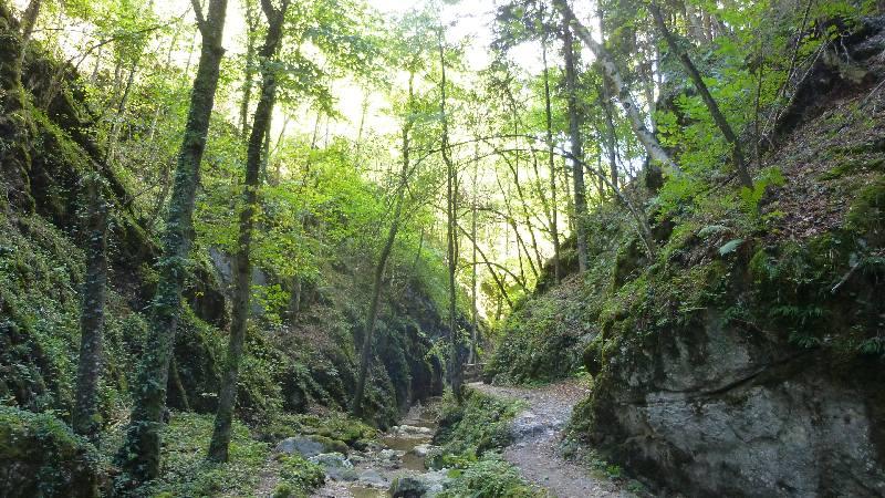 Johannesbachklamm Wandern Wanderung Natur Würflach Wald