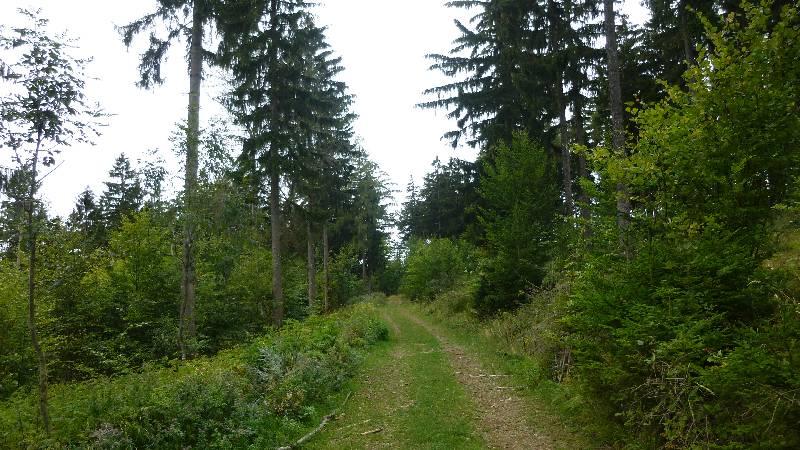 Johannesbachklamm Wandern Wanderung Natur Würflach Aussicht Hohe Wand Wald