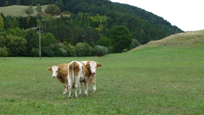 Johannesbachklamm Wandern Wanderung Natur Würflach Hohe Wand Wald Kühe Kuh