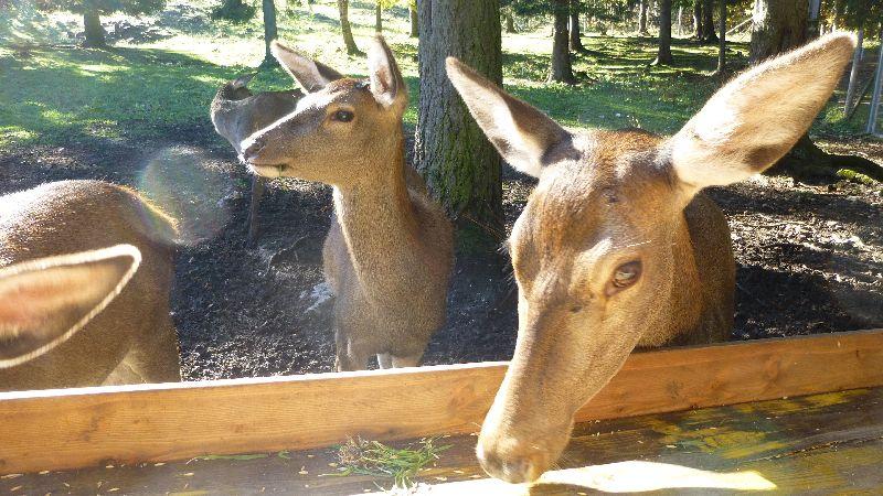 Hohe Wand Niederösterreich Skywalk Aussichtsturm Tierpark Naturpark Wandern Wanderung Aussicht Rehe Tiergehege