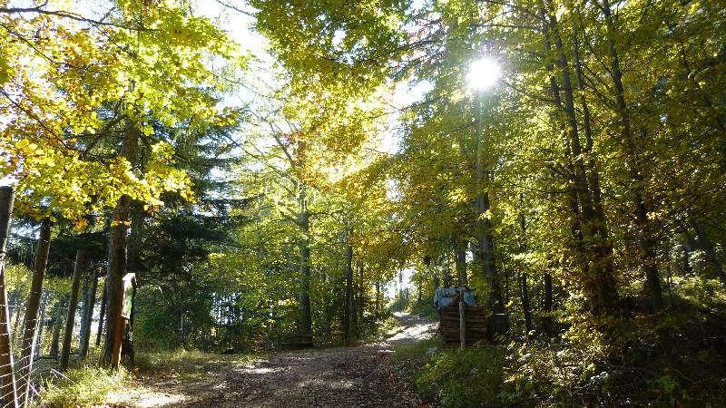 Hohe Wand Niederösterreich Skywalk Aussichtsturm Tierpark Naturpark Wandern Wanderung Aussicht Wald