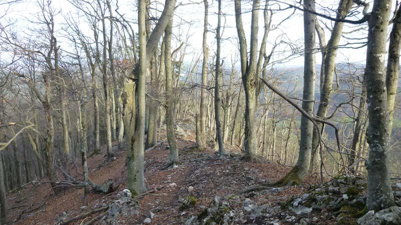 Wald Wandern Wanderung Niederösterreich Gaisstein Gipfel Gipfelkreuz Aussicht