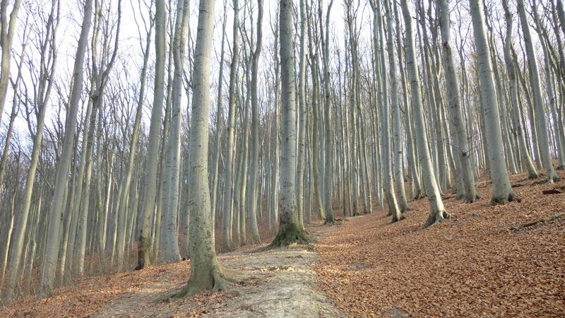 Naturpark Purkersdorf Wienerwald Tiergehege Tiere Aussicht Aussichtsturm Wandern Wanderung Niederösterreich Wald