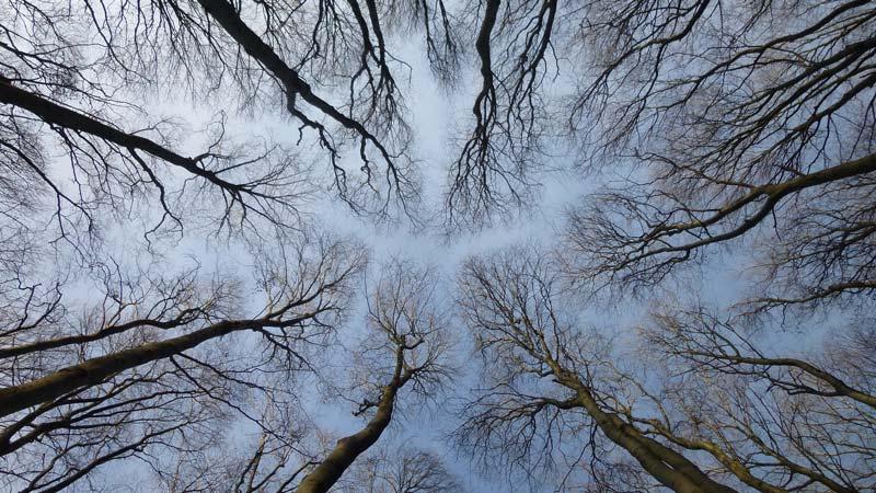 Naturpark Purkersdorf Wienerwald Tiergehege Tiere Aussicht Aussichtsturm Wandern Wanderung Niederösterreich Wald Bäume