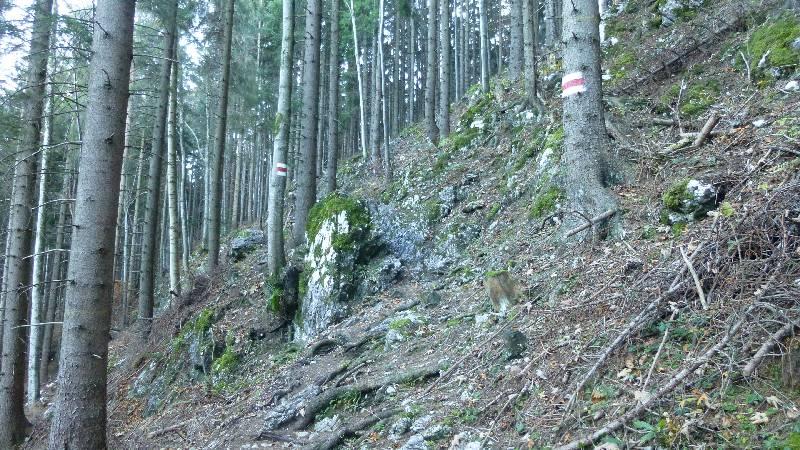 Schneeberg Wandern Almreserlhaus Edelweißhütte Mamauwiese Wald