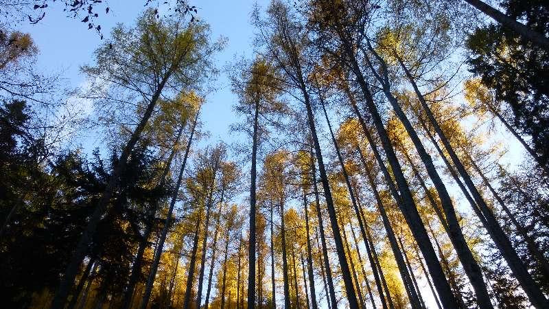 Schneeberg Wandern Almreserlhaus Edelweißhütte Mamauwiese Aussicht Herbst