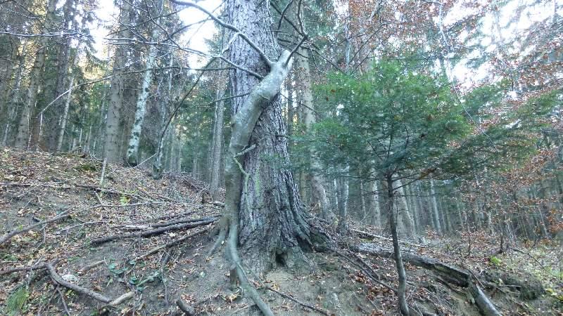 Schneeberg Wandern Almreserlhaus Edelweißhütte Mamauwiese Aussicht Wald Baum Natur