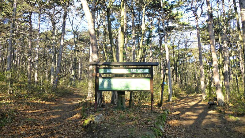 Harzberg Wandern Wanderung Natur Wald Aussicht Aussichtswarte Jubiläumswarte Waldlehrpfad