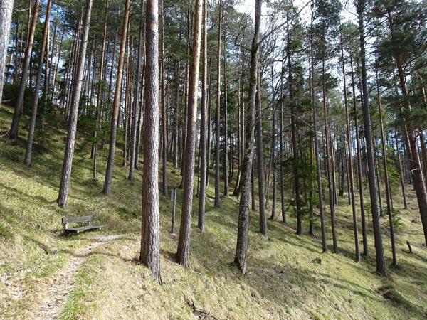 Mariahilfberg Gutenstein Wandern Wanderung Natur Wald Aussicht Schneeberg Grotte Kreuzweg Bäume