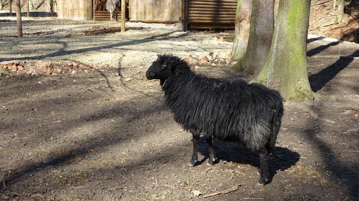 Naturpark Sparbach Wienerwald Wandern Wanderung Niederösterreich Ruine Tiere Streichelzoo Park Wald Natur Aussicht Schaf