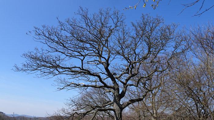 Naturpark Sparbach Wienerwald Wandern Wanderung Niederösterreich Ruine Tiere Streichelzoo Park Wald Natur Aussicht Baum