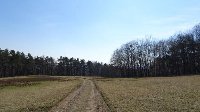 Naturpark Sparbach Wienerwald Wandern Wanderung Niederösterreich Ruine Tiere Streichelzoo Park Wald Natur Aussicht Dianawiese
