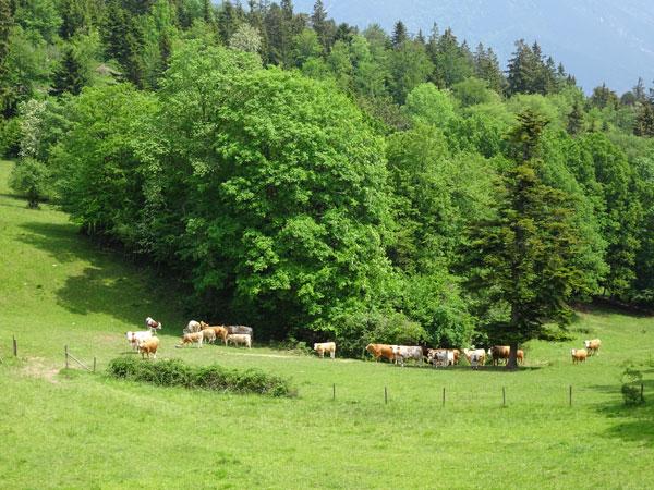 Rudolf Fordinal Haus Elisabethaussicht Großer Kitzberg Wandern Wanderung Niederösterreich Aussicht Waidmannsfeld Pernitz Natur Wald Kühe