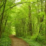 Naturwesen im Helenental? Eine Spurensuche