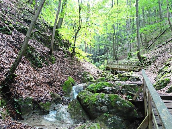 Steinwandklamm Klamm Niederösterreich Furth Triestingtal Wandern Wanderung Höhle Aussicht Natur Wald