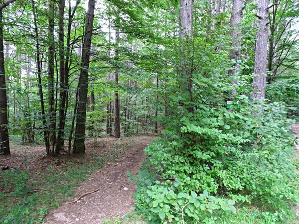 Nach dem Steinbruch bin ich bei der Kreuzung mit dem großen Felsen hier in den Wald abgebogen
