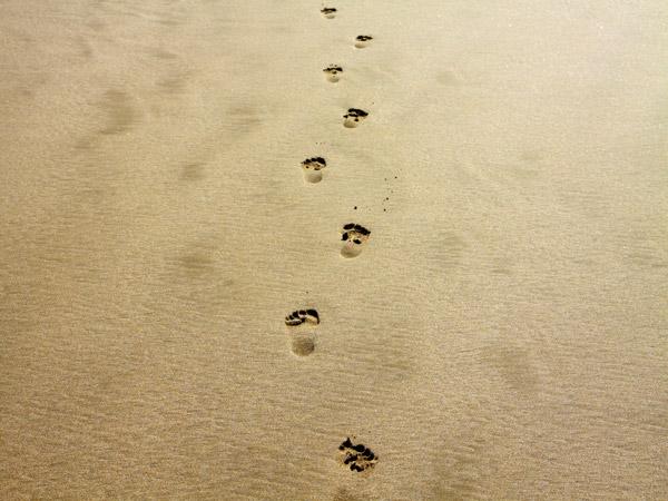 footprint-1021452_1