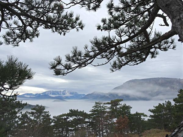 Kienberg Willendorf Fischauer Vorberge Aussicht Wandern Wanderung Natur Wald Niederösterreich