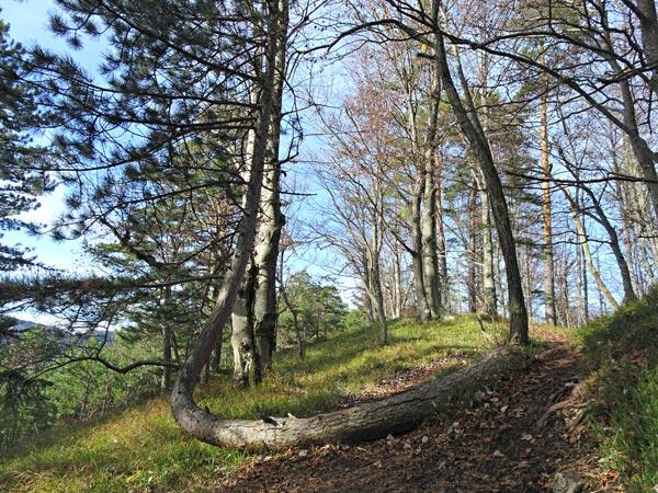 Kieneck Muggendorf Thal Enzianhütte Enziansteig Matrassteig Viehgraben Wandern Wanderung Natur Wald Aussicht Gipfel Gipfelkreuz Gutensteiner Alpen Niederösterreich