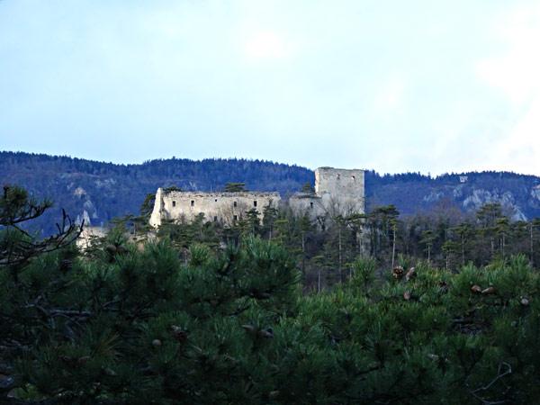 Ruine Emmerberg Winzendorf Niederösterreich Wandern Wanderung Rundwanderung Rundwanderweg Steinernes Bankerl Aussicht Wald Waldandacht Natur Bewegung