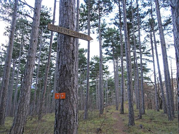 Winzendorf Niederösterreich Wandern Wanderung Rundwanderung Rundwanderweg Steinernes Bankerl Aussicht Wald Waldandacht Natur Bewegung